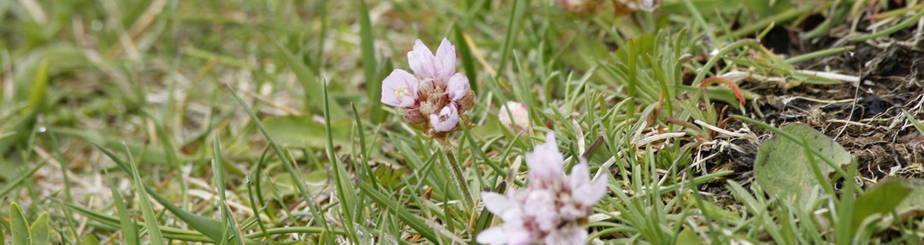 blom1